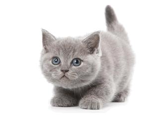 Pet Cat Insurance Benefits