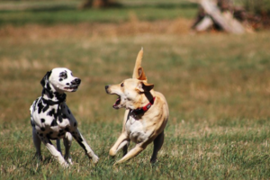 Effective remedies for Hyperkeratosis in dogs