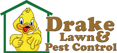 About the Pest Control in Chelmsford