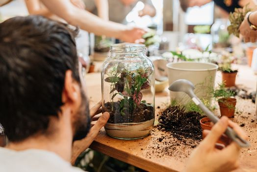 Way to Change Your Home with the Terrariums